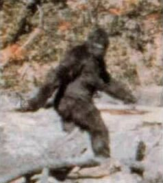 Frame from the Patterson Gimlin bigfoot footage of 1967.
