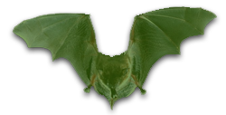 Newsletter Bat